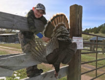 Wyoming's Turkey Hunting Season Has Been Extended
