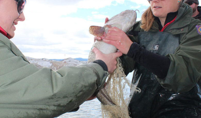Burbot Bash Cancelled Due To Ice Conditions