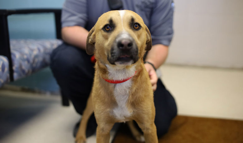 Adorable & Adoptable–Pets of the Week: Gimley, Clyde, & Gracie