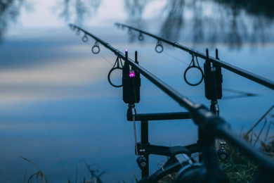 Non-Resident Fishing Licenses to Resume Sales, Turkey Hunting Season Extended