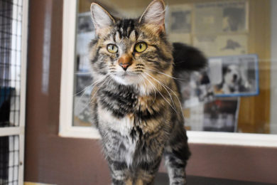 Adorable & Adoptable–Pets of the Week: Roxie, May, & Jigs