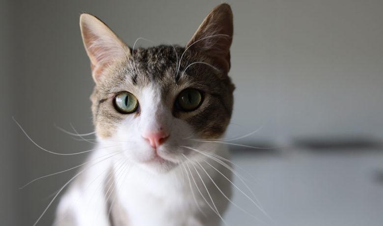 Adorable & Adoptable–Pets of the Week: Toes, Vinny, & Leah