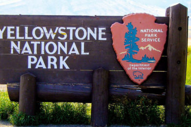 Yellowstone Visitation 200 Cars Short of Last Year's Memorial Day Weekend