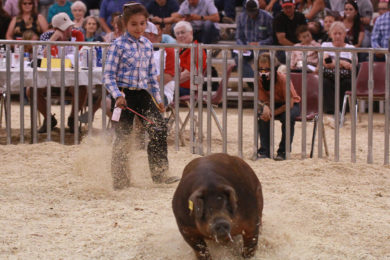 Sweetwater and Daggett County Fair Schedule Announced