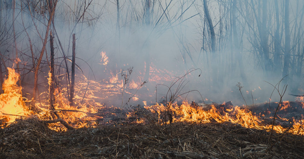 Wyoming State Forestry Division Prepares for Wildfire Season Without Annual Briefing
