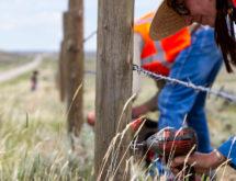 Volunteers Improve Fencing to Help Pronghorn Move Across Highway 28