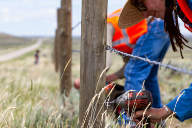 Volunteers Improve Fencing to Help Pronghorn Move Across Highway 28
