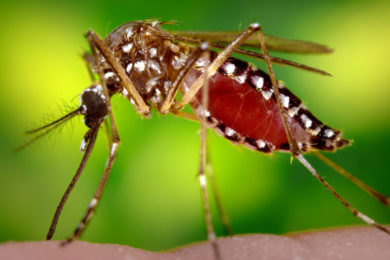 Green River to Begin Summer Mosquito Control Efforts