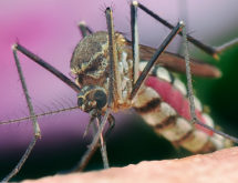 City of Rock Springs to Begin Mosquito Abatement Program