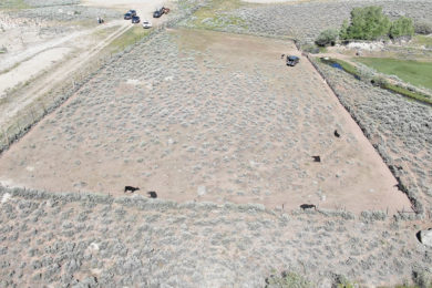 Public Information Sought on Cattle Deaths near Pinedale