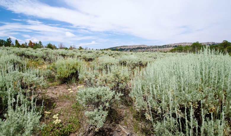 Wyoming Land Purchase Takes Another Step Forward