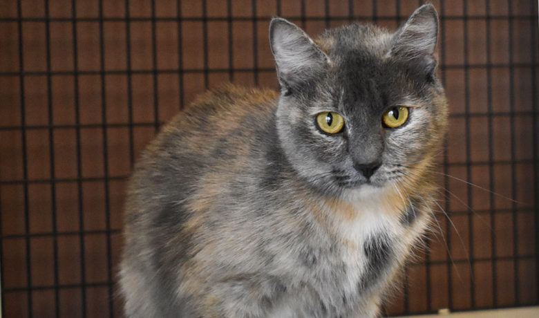 Adorable & Adoptable–Pets of the Week: Teton, Smokey, & Calypso