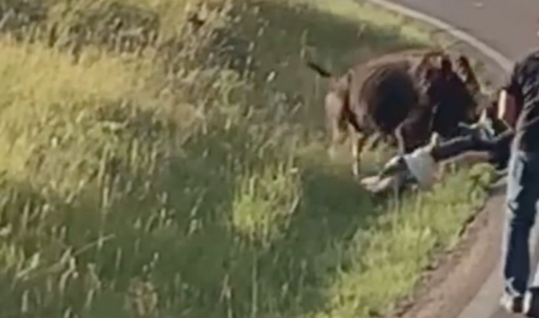 VIDEO: Woman Swung Around in Violent Attack by Bison