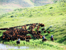 2020 Wyoming Cattle Industry Convention and Trade Show to Take Place in Rock Springs