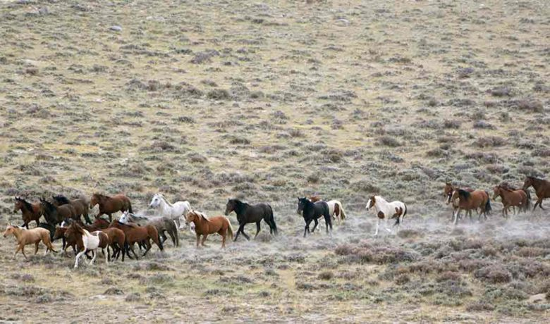 3 New Horse Corrals to Help with Western Wild Horse Roundups