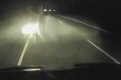 WATCH: Evanston Man Gored by Elk in I-80 Crash