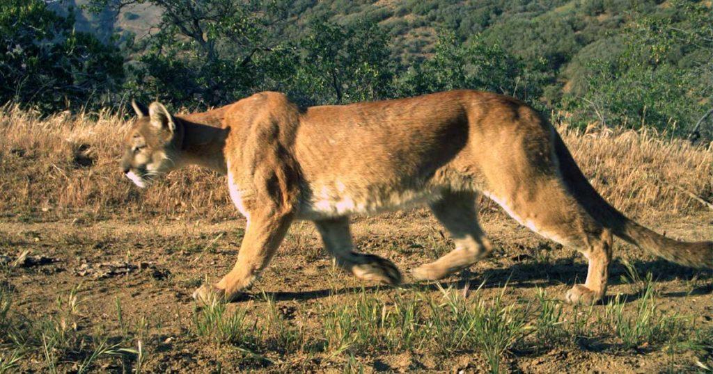 UW Researchers Develop Technology to Identify Animals in Photos