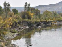 A Silver Lining: Repurposing Fallen Trees for Riverbank Stabilization