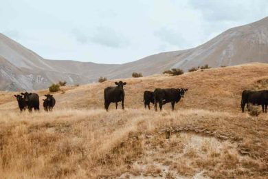 Officials Seek Information on Livestock Shootings in Uinta County