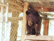 Second Bear Wanders into Rock Springs; Finds New Friends and a New Home