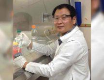 Cardiomyopathy Pig Study Findings May Help Humans