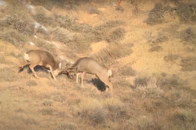 [VIDEO] Wyoming Brawl Caught on Tape