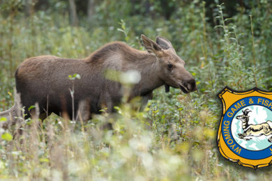 Wyoming Game and Fish Seeking Info on Two Poaching Incidents