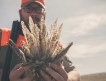 [VIDEO] Film Highlights Crossroads Between Hunting and Conservation of Sage Grouse