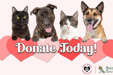 Show Love for Sheltered Fur Babies This Valentine's Day