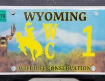 Wyoming Conservation License Plates Sales Generate Over $300K