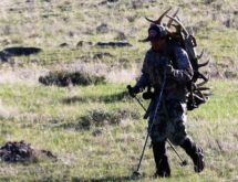 New Shed Antler Collection Rules Take Effect May 1