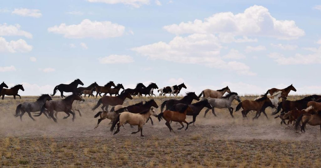 Bureau of Land Management Seeks Public Comment on Wild Horse Assessment