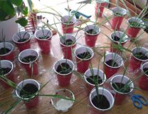 Houseplant and Seed Swap to Take Place Saturday
